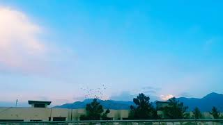 Young Fighter and Racing Pigeons of Pakistan Quetta Pigeons new season