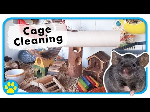 Cleaning My Mouse Cage | Cleaning Tips | Does Zinc Smell?