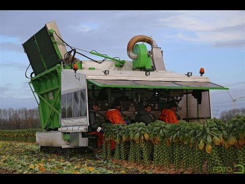 The story of the Brussels sprout | The sprout roller coaster! | Gebr. Herbert Zeewolde