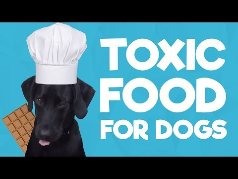 3 Foods NOT To Feed Your Dog