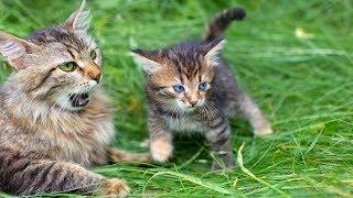 Funny Cat Videos - Mom Cat Talking to Kittens Cute Cat Videos (2019)