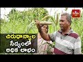 How To Earn More In Organic Millet S Cultivation Narsa Reddy Success Story Hmtv Agri mp3