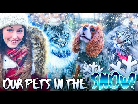 *VLOG!* ❄️TAKING THE PETS OUT IN THE SNOW!❄️ (+ Merch ideas!)