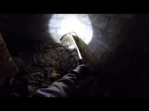 removing Raccoon from Crawl Space in White Plains NY,