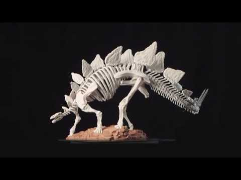 Stegosaurus Skeleton: 360 Rotation