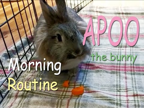 Apoo the Bunny Morning Routine