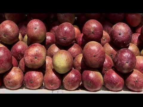 Shape Up Sn 08 - Ep 08 Mangoes, Oranges, Home Biogas (English)