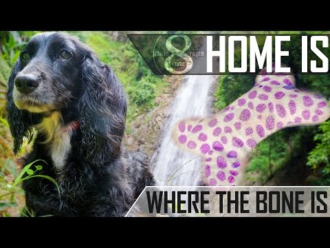 'HOME IS WHERE THE BONE IS' - EDEN'S MOVING TO BANGKOK (8MFH EP28)