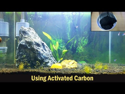 Using Activated Carbon in Aquariums