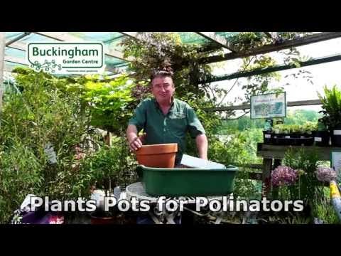 Planting a container for pollinators like bees & butterflies.