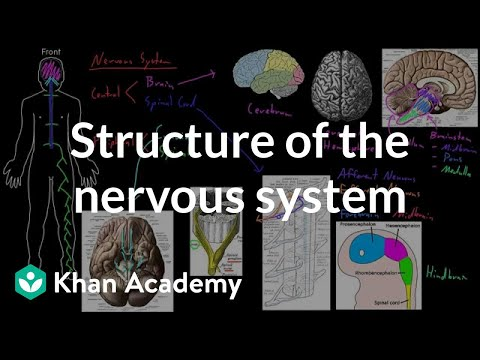 Structure of the nervous system | Organ Systems | MCAT | Khan Academy