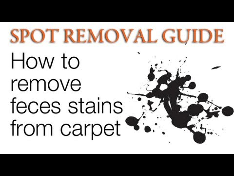 How to Clean Feces stains from Carpet | Spot Removal Guide