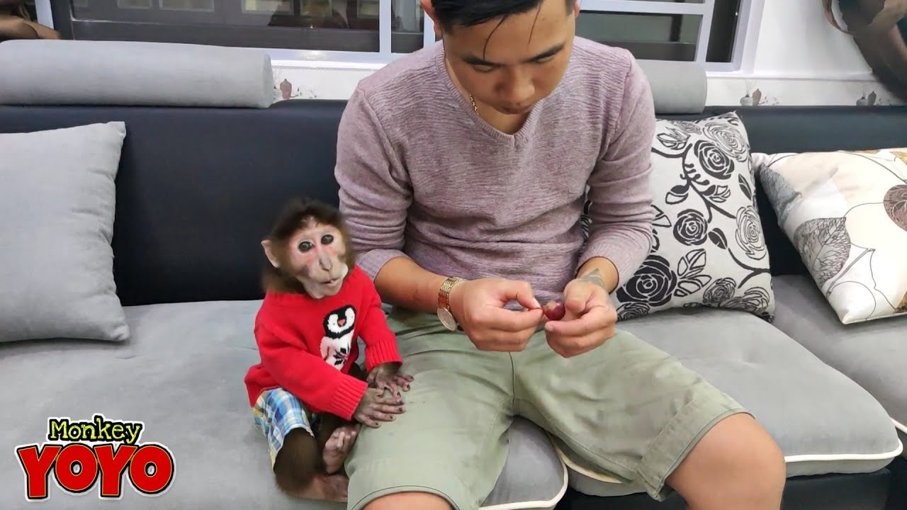 Dad takes care of YoYo JR in new home