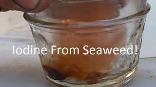 Extracting Iodine From Seaweed