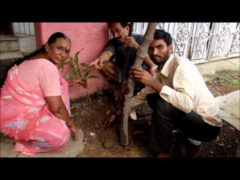 PLANT TREES....STREETS OF CHENNAI INDIA...stop global warming...maaran..green world foundation