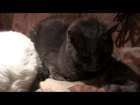Outdoor cats - freezing artic temperatures.  How do they survive?