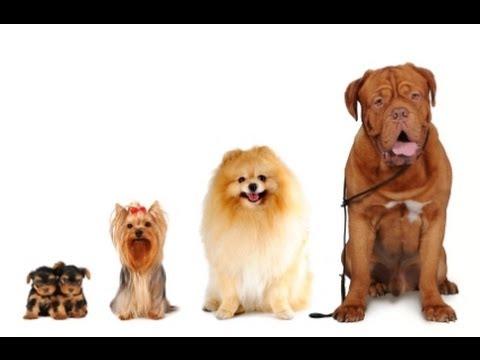Multi-Dog Households, Dog Training