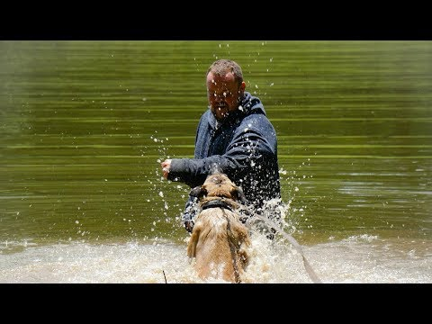 Police K9 Training    Apprehension in water