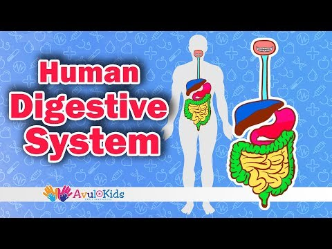 How the Digestive System works | Body science for kids | Journey of food| Science for grade 4