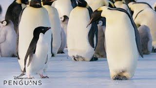 Disneynature Penguins | In Theatres April 17