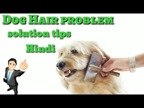 How to solve Dog Hair Fall PROBLEM in Hindi 2017