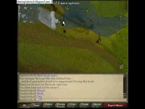 Monkey madness agility course