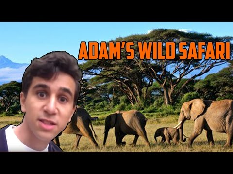 ADAM'S WILD SAFARI
