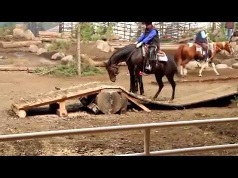 Regi   Extreme Mountain Trail Horse
