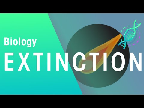 Extinction of Species   Biology for All   FuseSchool