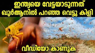 ഖുര്ആന് പറഞ്ഞ വെട്ടു കിളി 😳 ഇന്ത്യയെ വേട്ടയാടുന്നു Swarm of Crop-Eating Locusts Across India