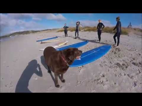 Salty Sisters Surf Club: Omaha Beach, Auckland NZ (July 2016)