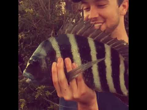 Check out this Sheepshead