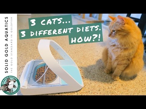 My Cats Learned Something New! // SureFeed Microchip Cat Feeder Unboxing & Review