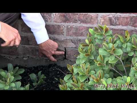 Roaches In Your Yard and Mulch Bed - Bulwark Exterminating Roach Control