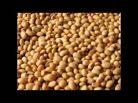 Nutrition profile of soy