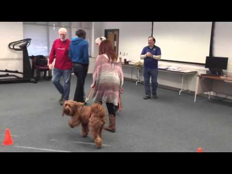 Therapy Dog Evaluation