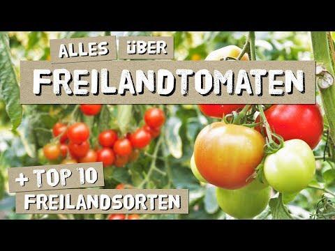 Freilandtomaten - Anbau, Tipps, Sorten