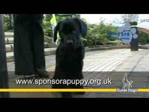 Guide Dogs UK - Sponsor a guide dog puppy appeal