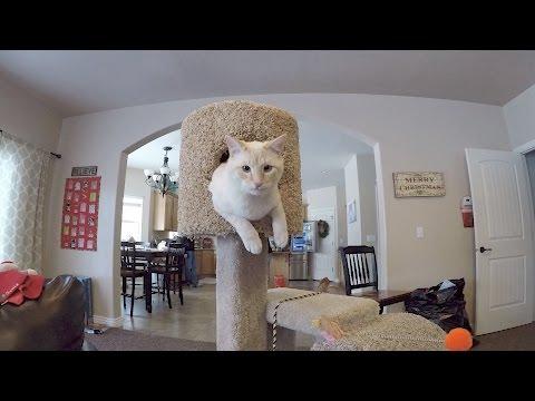 CAT CONDO EXPANSION