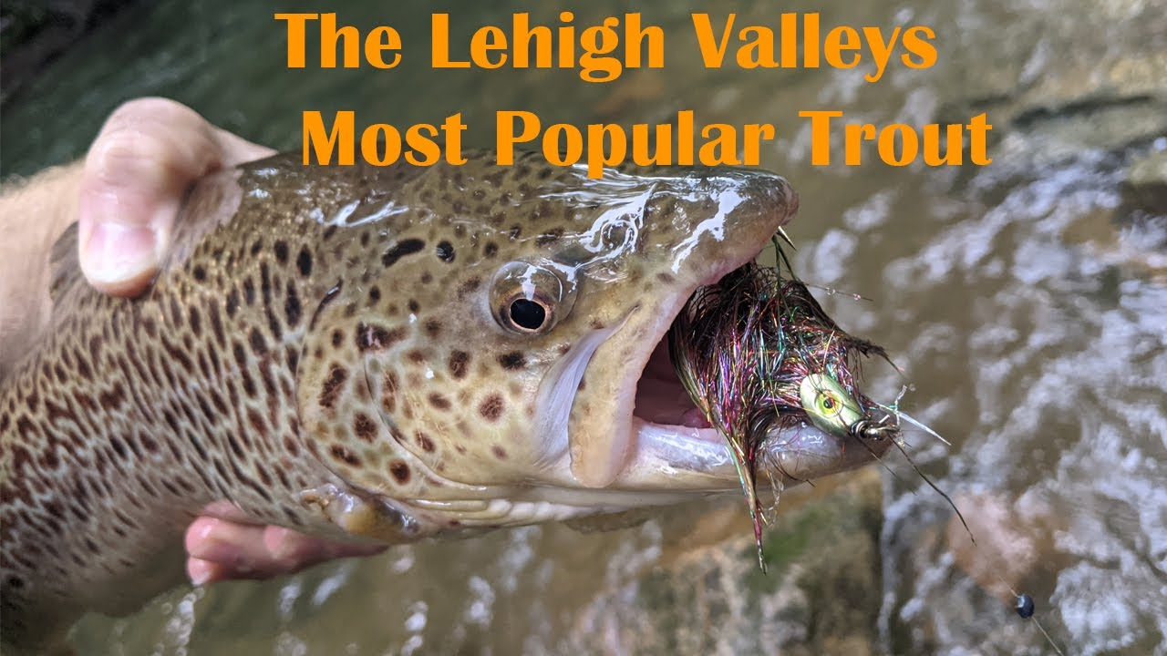 Most Popular Trout In The Lehigh Valley | PA Trout Fishing
