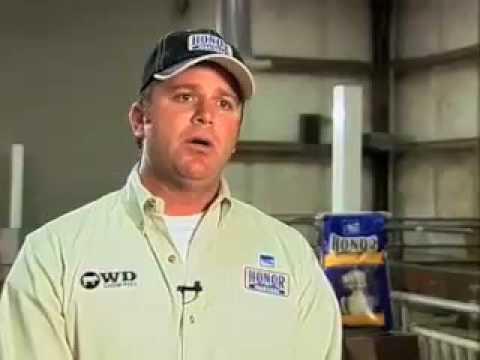 How can you find a good hog breeder?