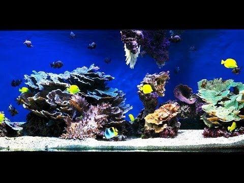 How to Aquascape a Saltwater Aquarium | Aquarium Care