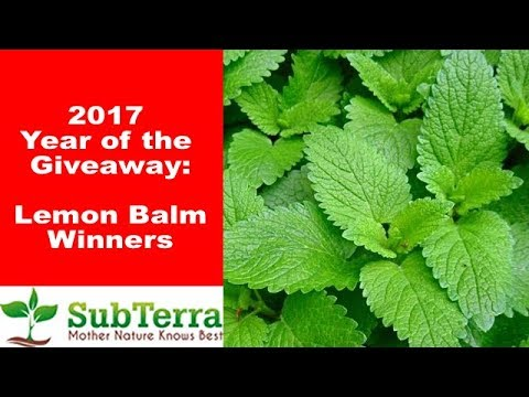 August Lemon Balm Winners