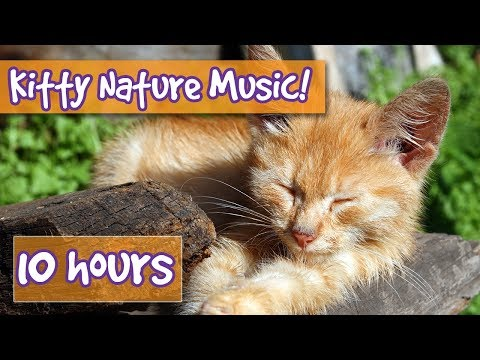 Relaxing Cat and Kitten Music with Nature Sounds! Music to Calm Cats with Nature and Animal Sounds!