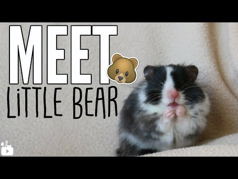 MEET LITTLE BEAR 🐻