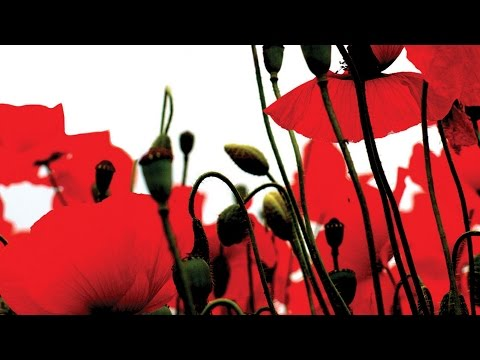 The Halle - Elgar The Spirit of England: For the Fallen