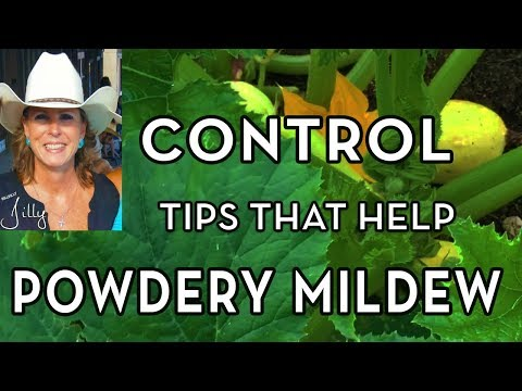 Tips for Controlling Powdery Mildew and Insects on Squash Plants Without Chemicals