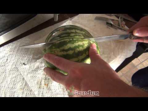 Watermelon Harvest & Seeds