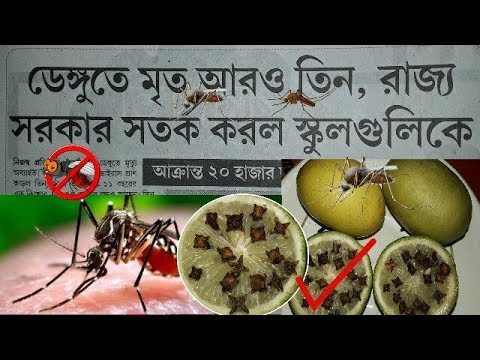 how to avoid dengue mosquito || home remedies for dengue and diet tips in bangla