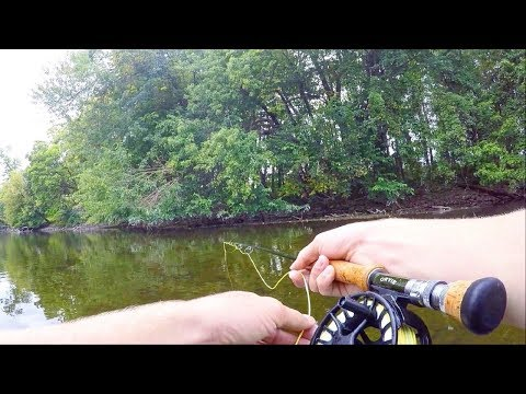 Fly Fishing TRICKY Carp In Shallow Cover